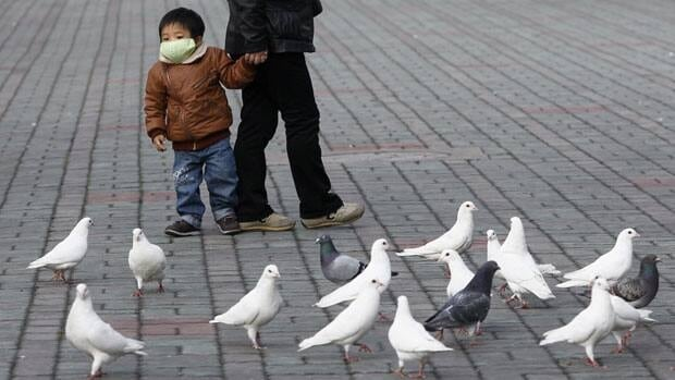 A boy wearing a mask to protect against a new strain of bird flu looks at pigeons at a public park in People Square, downtown Shanghai. The Hangzhou Carrier Pigeon Association plans to vaccinate up to 90,000 pigeons to protect against bird flu types