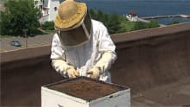 nb-bees-fredericton-hotel-leavitt
