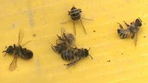 hi-dead-bees-852-6col