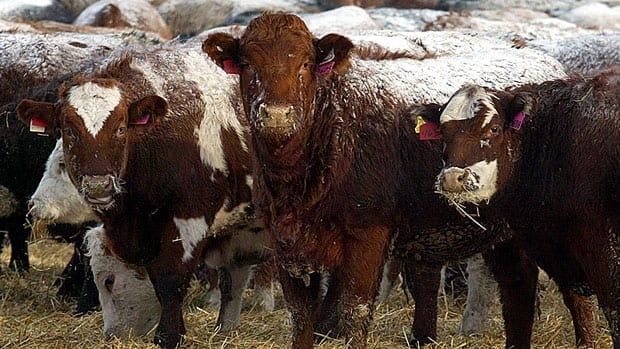 Beef is one of the hot-button issues in agricultural talks as part of negotiations toward a Canada-EU free-trade deal.