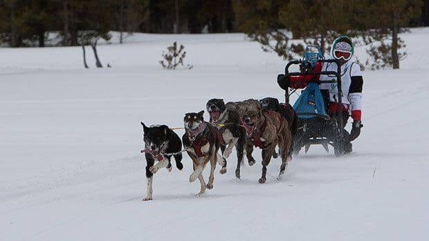 Sleddog racing was one of events that was going to be dropped from the 2016 Arctic Winter Games. (CBC)