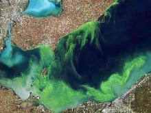 hi-wdr-blue-green-algae