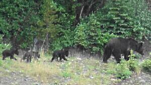 si-bear-94-300
