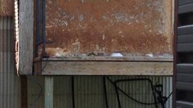 hi-cat-house-platform-852-4col