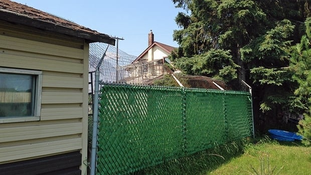 Wire fencing surrounds a backyard in Thunder Bay's Westfort area, where 46 cats allegedly live.