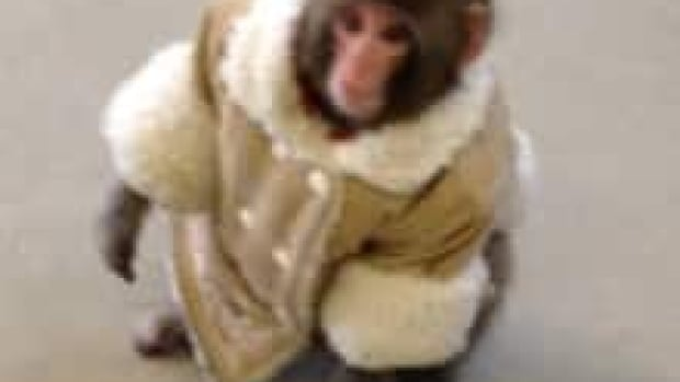 The sanctuary that houses the Ikea monkey is auctioning off a guitar signed by Comedian Ricky Gervais.