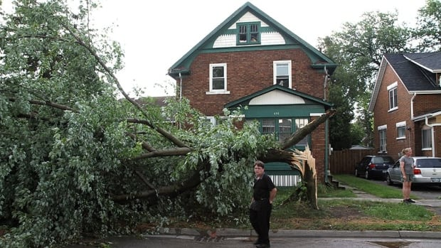 A mature tree on Louisa Street, in Kitchener, is one of hundreds split by a violent storm  Friday, July 19, 2013. Forestry crews believe it could take a month to clean up the damage.