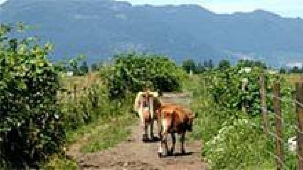 mi-bc-archive-raw-milk-farm