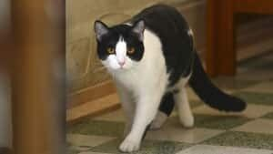 mi-mayor-cat-2-rtx10p2h