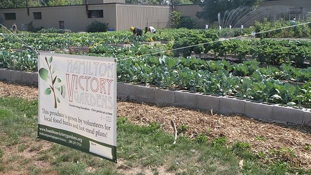 The Hamilton Victory Gardens grow food for the needy in the city.