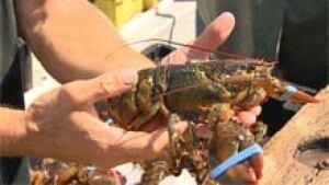 nb-lobster-generic