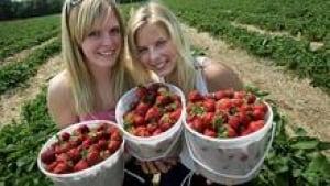 si-strawberries-220-cp-1556