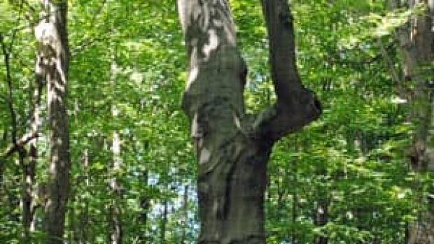 mi-tree-with-face-300