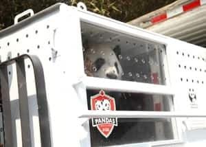 300-panda-crate-fedex