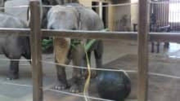 si-rani-elephant-220-new