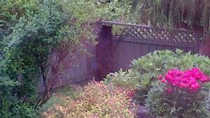 mi-bc-130607-burnaby-bear-fence