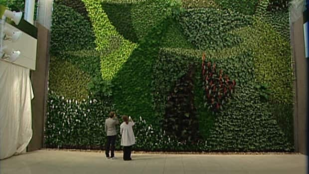 At 1,400-square feet and with 8,000 individual plants, Edmonton International Airport's living wall is one of the largest in Canada.
