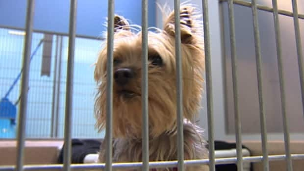 The Edmonton Humane Society is completely full and for the first time ever, has to turn away people who want to give up their pets.