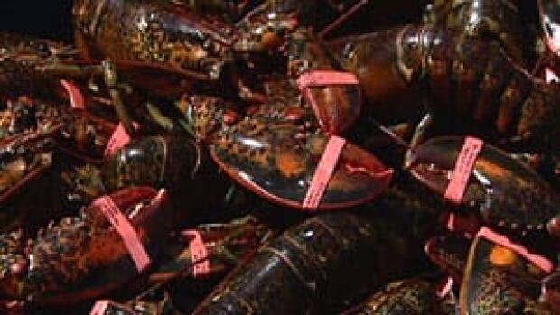 pe-mi-lobster-live-300
