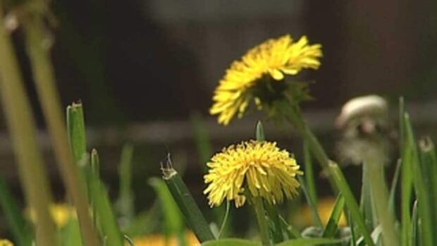 Council votes to spend $3 million to cut grass and spray herbicide on the city's 1,500 fields in 2018.