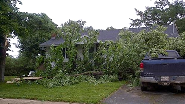 This tree at 193 Edinburgh St. in Fredericton was one of numerous casualties in Tuesday's flash wind and rain storm.