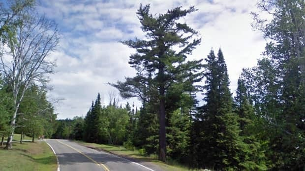 In 2011 this white pine (centre) on Lyon Boulevard in Thunder Bay stood as witness to 100 years of history. In June the tree was felled by a vandal.