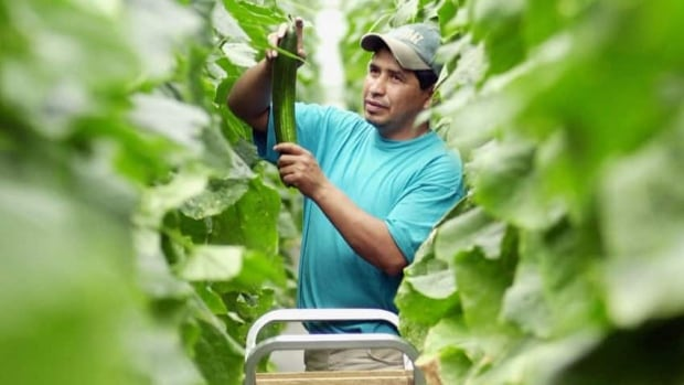 There are about 4,000 seasonal workers from Guatemala in Quebec.