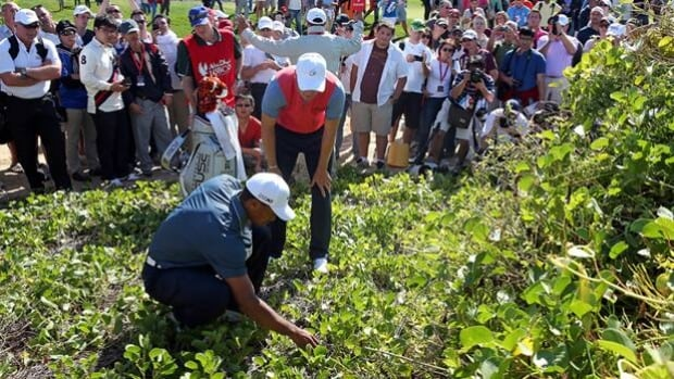 Tiger Woods crouches in the weeds in search of his golf ball with help from Martin Kaymer.