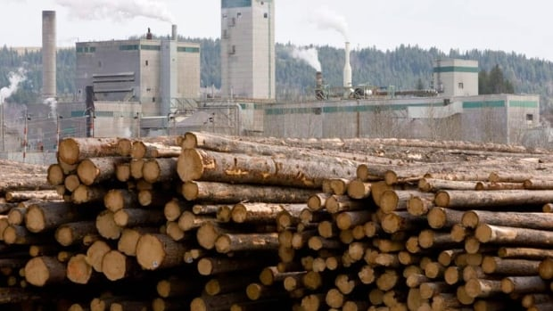 The value of products from Alberta's forestry industry increased by 14 per cent last year, according to the Alberta Forest Products Association. (Canadian Press)