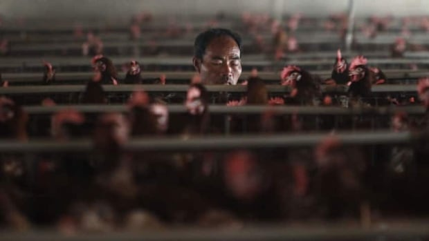 An employee works at a poultry farm on the outskirts of Shanghai. The World Health Organization says that people seem to catch the H7N9 virus from birds more easily than the H5N1 strain that ravaged poultry across Asia in 2003.
