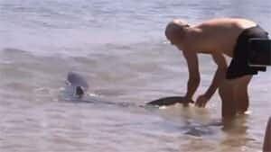 ii-sharkwrestler