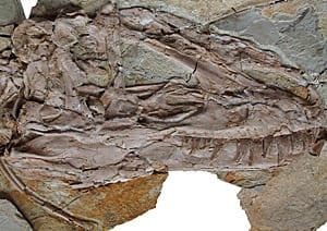 sm-220-tyrannosaur-skull-nature