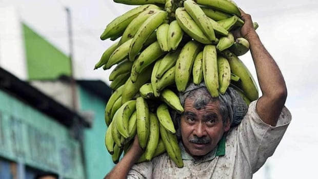 A worker loads bananas from a delivery truck in Guatemala City, Guatemala. Climate change may move the crop north in coming years, a report says.