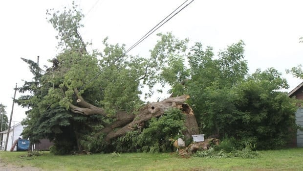 Trees and power lines were the big casualties in Friday's powerful storms.