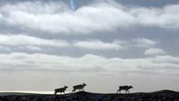 nl-li-caribou-horizon-file