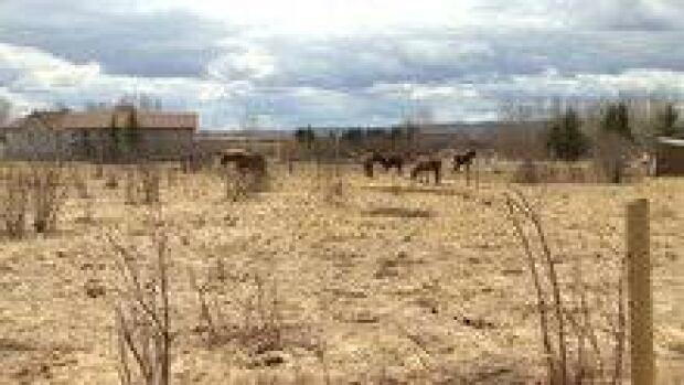 hi-forgotten-farm-3col