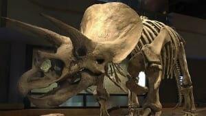 si-dinosaur1