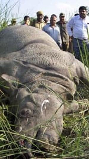 si-rhino-poaching-9658914