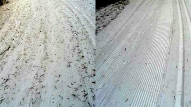 Windy conditions in Kananaskis have played havoc on cross-country trails, says ski blogger Bob Truman. He took these photos of Aspen Trail before, left, and after being groomed.