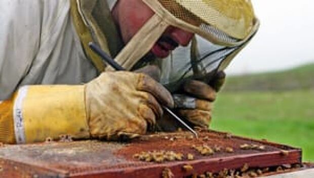 li-300-beekeeper