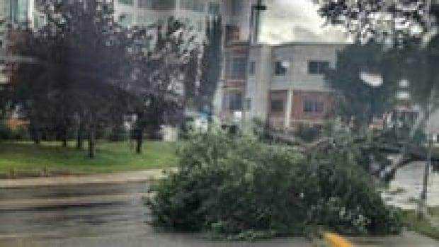 hi-storm-pic-1-3col