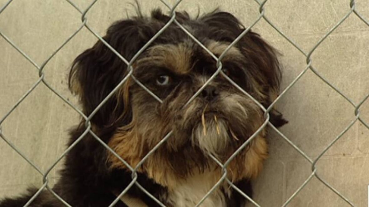 Ottawa Rescue Dogs For Adoption