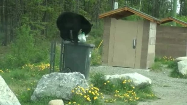 A black bear goes after garbage from a bin in Whitehorse in 2012. (Ken Knutson)