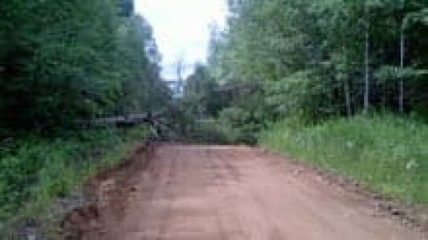 si-nb-tree-rogersville-220