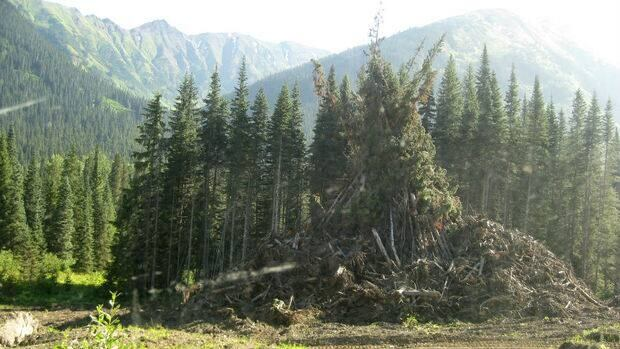 A slash pile on Highway 37, the Ningunsaw Pass, in northwest B.C.