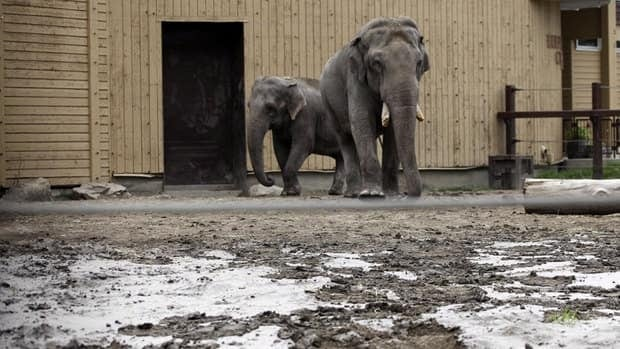 The flood-damaged Calgary Zoo is laying off almost 300 staff members.