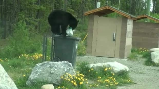 A black bear goes after garbage from a bin in Whitehorse.