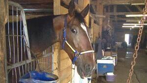 ns-truro-horse-4col