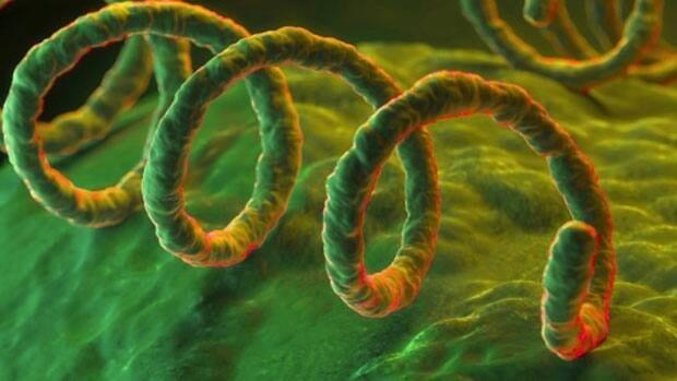 li-syphilis-getty107702866