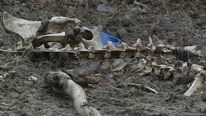 nl-moose-bones-20130506